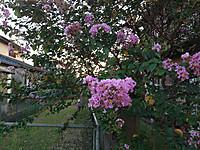 Img_9956
